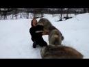 Тамбовский волк тебе товарищь